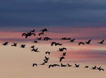 Piccole isole e uccelli migratori. Un viaggio lungo una vita