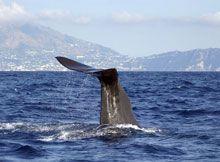 Un mare di cetacei