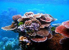 Barriere coralline e pesci