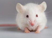 Sperimentazione animale, la spaccatura che non c'è