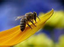 Le contaminazioni in apicoltura ad opera dei metalli pesanti